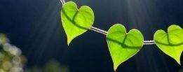 Jolies feuilles coeur